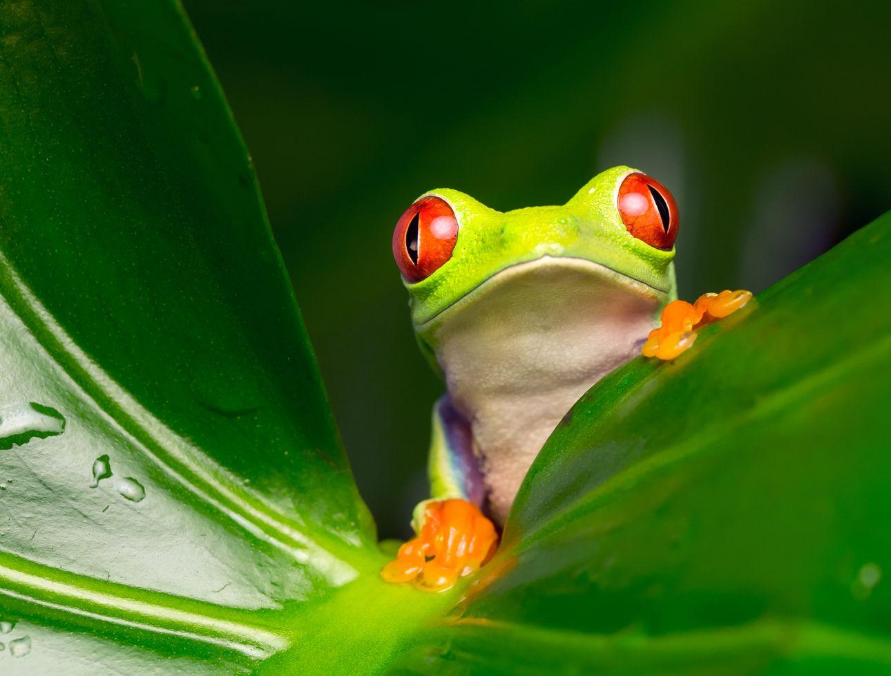 Kipp-Prozesse: Größerer Teil des Amazonas-Regenwaldes bedroht