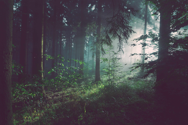 """PIK Statement zum Waldzustandsbericht: """"Klimaschutz ist Waldschutz"""""""