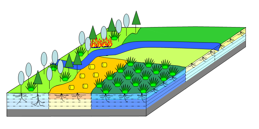 LPJmL - Lund-Potsdam-Jena managed Land — PIK Research Portal