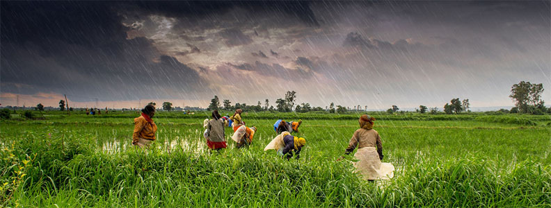 Photo Farmers at work in Madhya Pradesh during India's monsoon season