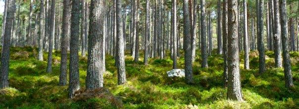 Forest and Ecosystem Resilience