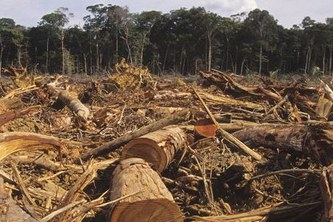 Energy from biomass pays even with forest protection in the long term