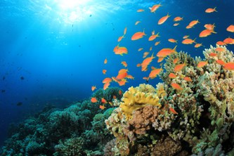 Most coral reefs are at risk unless climate change is drastically limited
