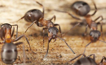 From Chaos to Order: How Ants optimize Food Search