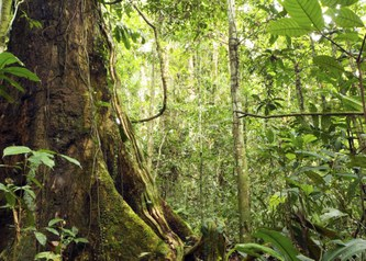 Protecting forests alone would not halt land-use change emissions