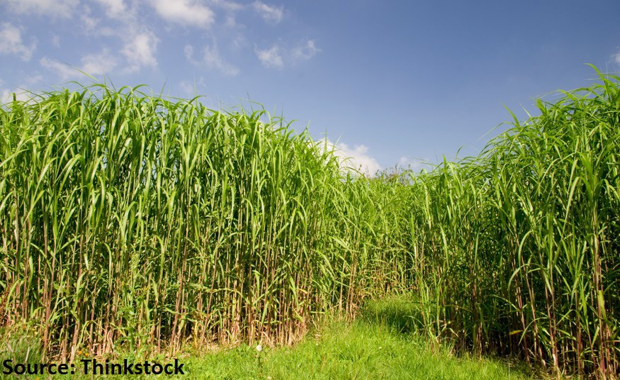Biomass plantations not compatible with planetary boundaries