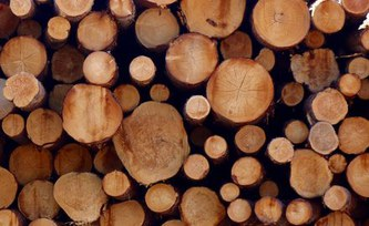 Europe's renewable energy regulation could harm global forests