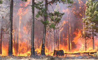 Fires, storms, insects: climate change increases risks for forests worldwide