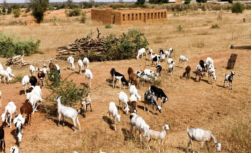 From dry to wet: Rainfall might abruptly increase in Africa's Sahel