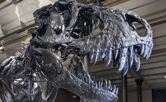 How the darkness and the cold killed the dinosaurs