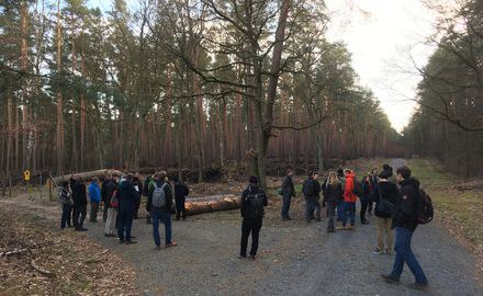 Managing forests in the 21st century: Experts gather at PIK