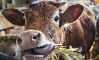 Spacefood for cows: Industrial microbes could feed cattle, pigs and chicken with less damage to the environment