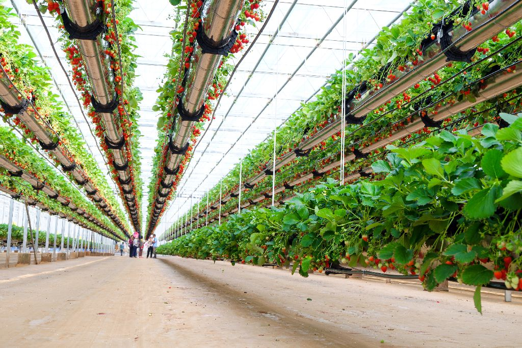Low food prices, high energy use: The pros and cons of emerging technology in our food system